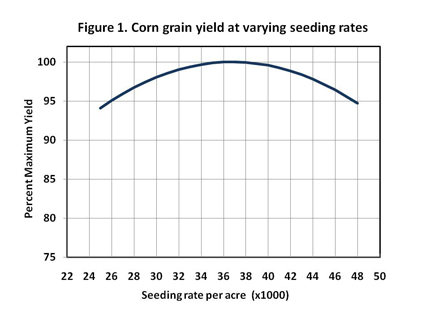 Diagram of corn grain yield at varying seeding rates