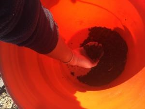 Thoroughly mix the cores in the plastic bucket to make a composite soil sample. Photo by Rebecca Vittetoe.
