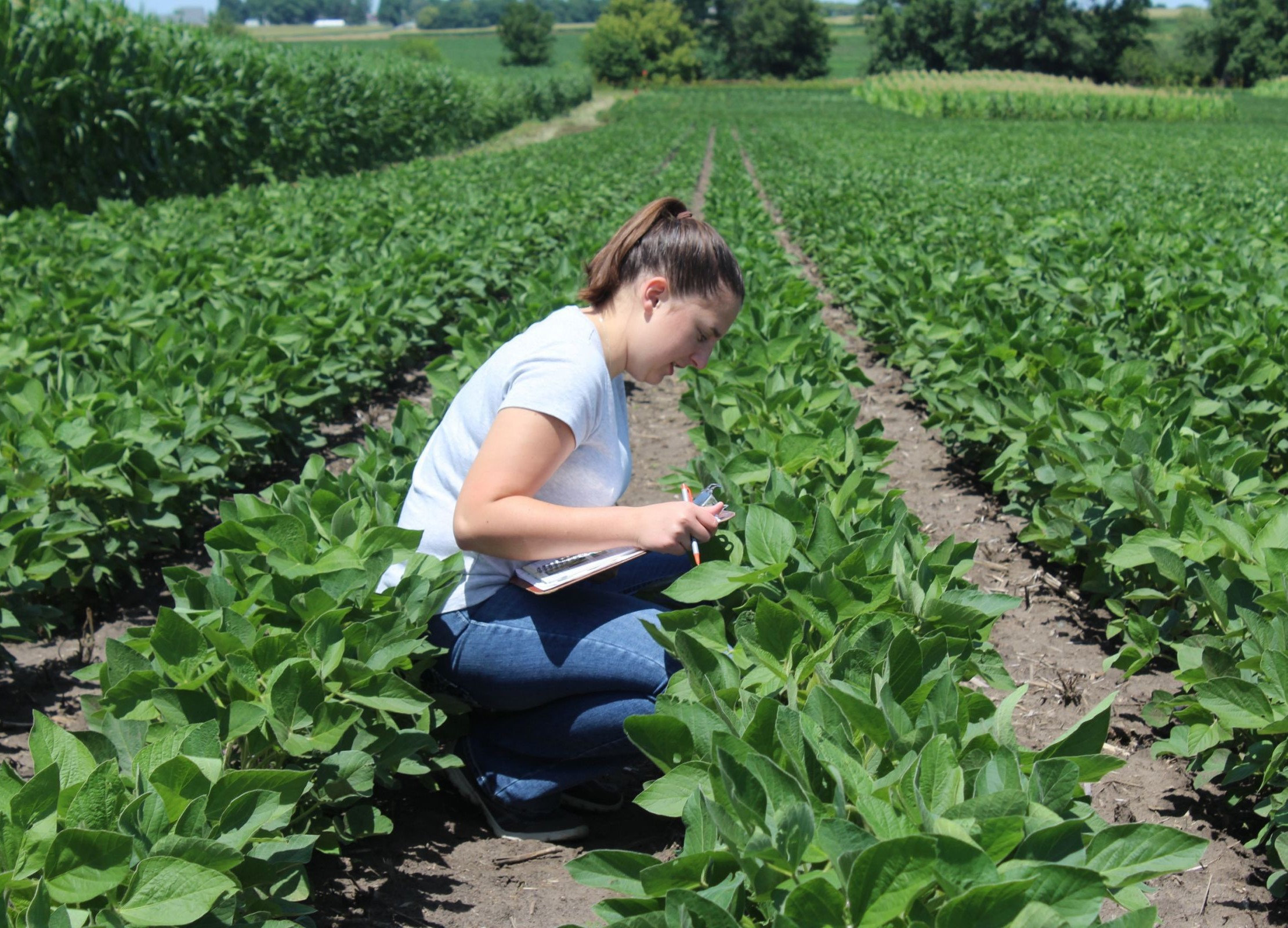 girl in soybean field scouting