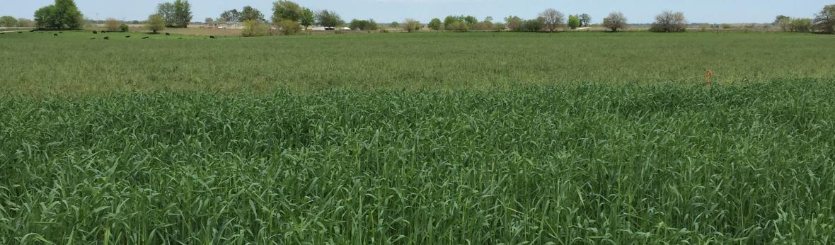 cover crop landing
