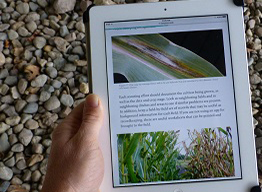 online book on ipad