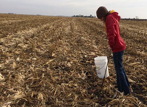 Rebecca taking soil sample in harvested corn field