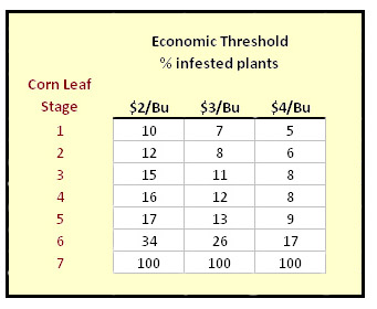 corn borer thresholds