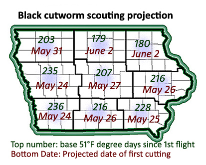 Black cutworm scouting projection map