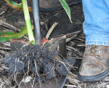 Nematodes damaging corn this year integrated crop for Soil xat cut off