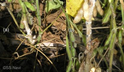 white mold symtoms