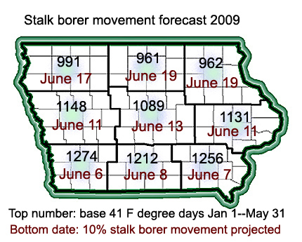 projected 10% migration date for stalk borer