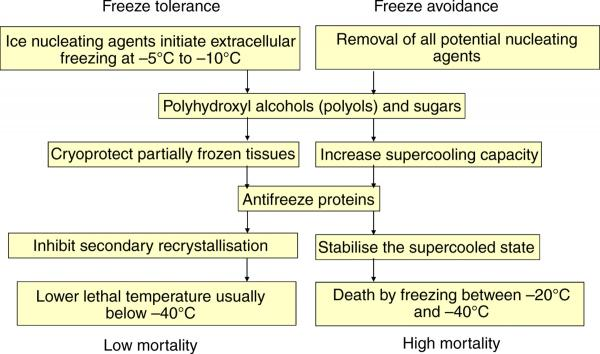 freeze tolerance vs. freeze avoidance