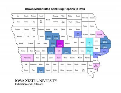 BMSB detection map for Iowa