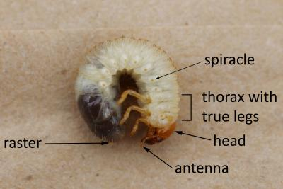grub identification