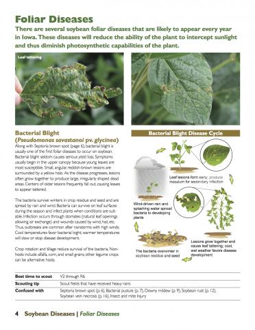 Bacterial leaf blight page from Soybean Diseases publication