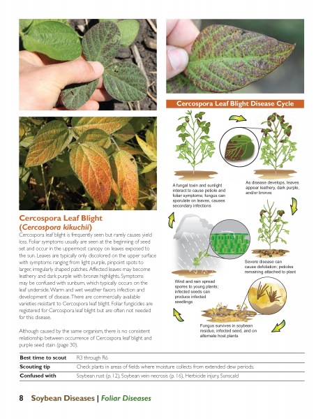 Sample page from newly revised Soybean Diseases from Iowa State University Extension and Outreach