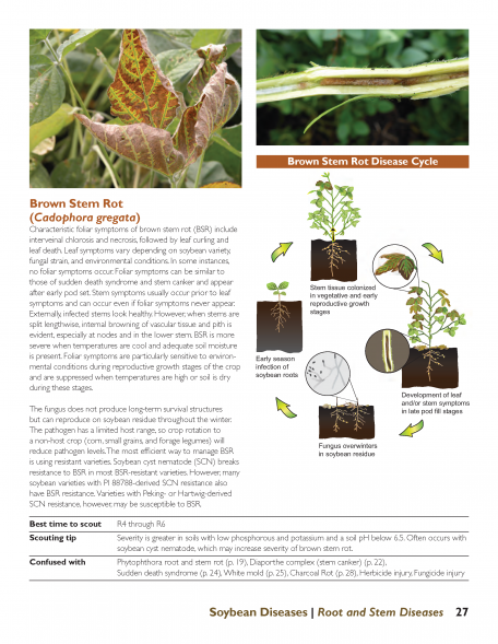 Stem disease sample page from newly revised Soybean Diseases from Iowa State University Extension and Outreach