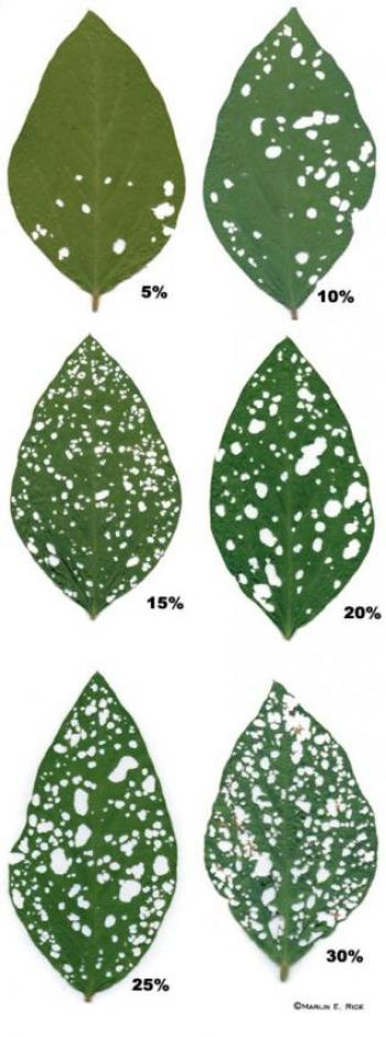 Approximate percent defoliation in soybean