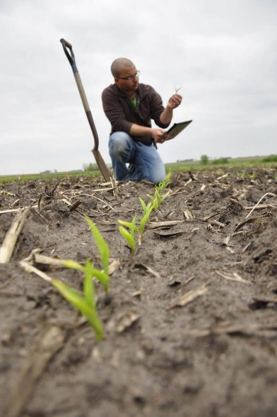 person scouting crop field