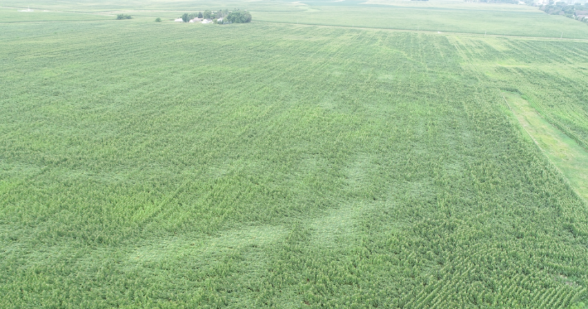 A Bird's Eye View of crop damage caused by high wind events.