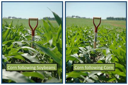 Plant Height Differences Between Corn Following Soybeans Left And Right In The Long Term Nitrogen Study Conducted By John Sawyer