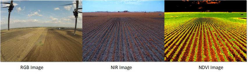 Color, NIR and NDVI imagery According to Iowa State ...