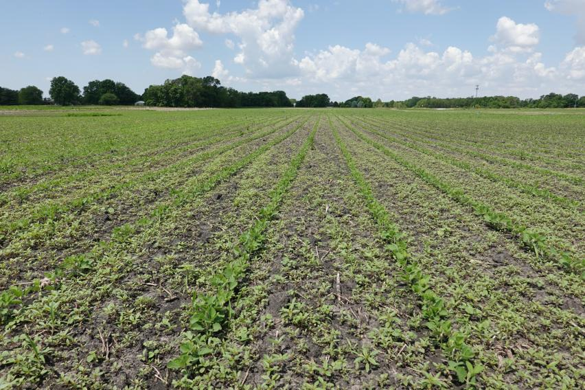 'Preemergence herbicides need rain to be effective'