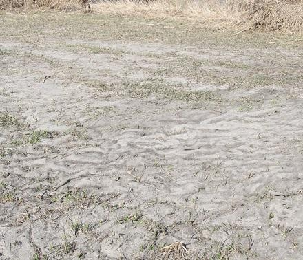 pasture covered with silt after flooding