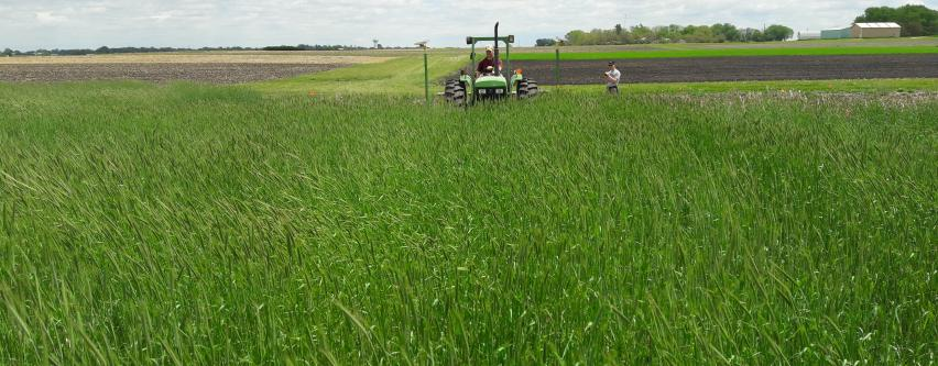 tractor planting in cover crop