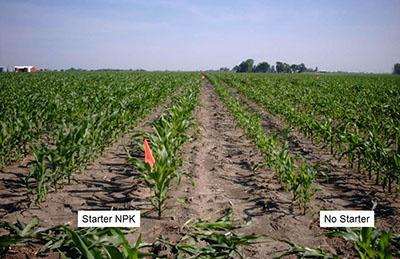 Starter Fertilization Sometimes Boosts Corn Yield Integrated Crop