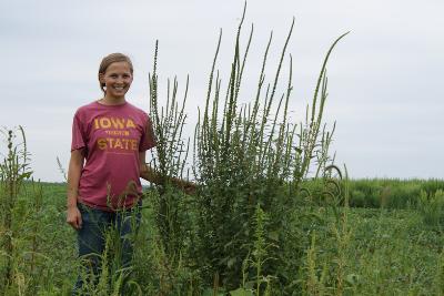 Palmer Amaranth Confirmed in Western Iowa | Integrated Crop Management