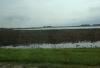 Wet field in C. Iowa